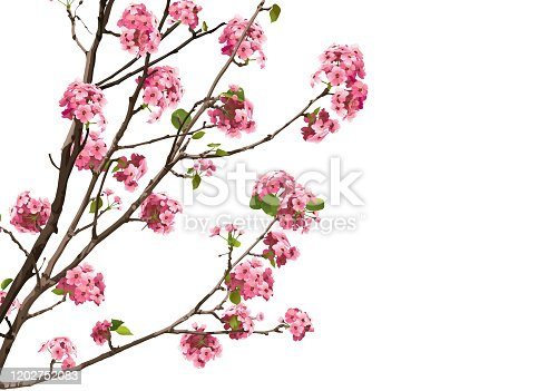 Pink Sakura Cherry Blossoms with Copy Space, Vector Illustration