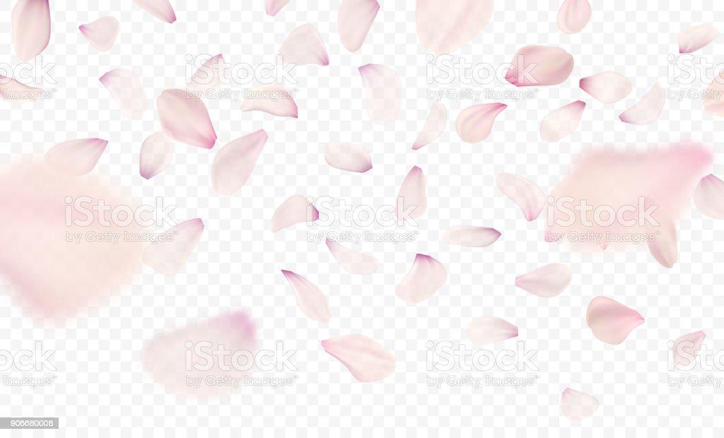 Pink sakura falling petals background. Vector illustration vector art illustration