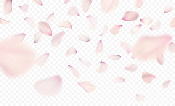 Pink sakura falling petals background. Vector illustration vector art illustration