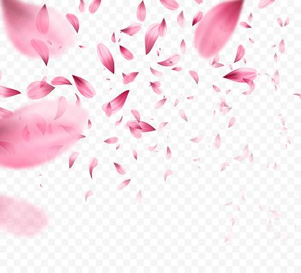 Rosa sakura cayendo fondo de pétalos. Ilustración de vector