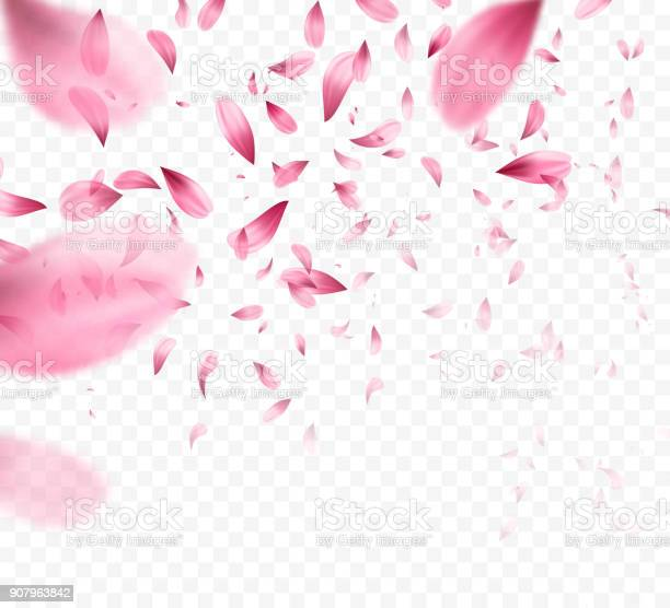 Pink sakura falling petals background vector illustration vector id907963842?b=1&k=6&m=907963842&s=612x612&h=1zhxdn7tzt ri myagnhfbugsffotx0smzq8gfdml8m=