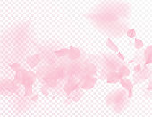 Pink sakura flower falling petals vector transparent background. 3D romantic valentines day illustration. Spring tender light backdrop. Overlay tenderness romance design