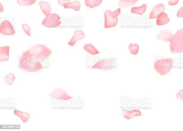Pink sakura or rose falling petals vector id937988736?b=1&k=6&m=937988736&s=612x612&h=1qrx5 sbyjl9ndcj7jw0oj0gfq8ubga12mgpfikjx e=