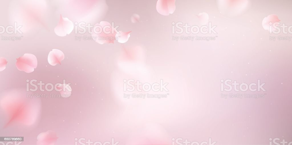 Pink sakura petals fall to the floor. vector art illustration