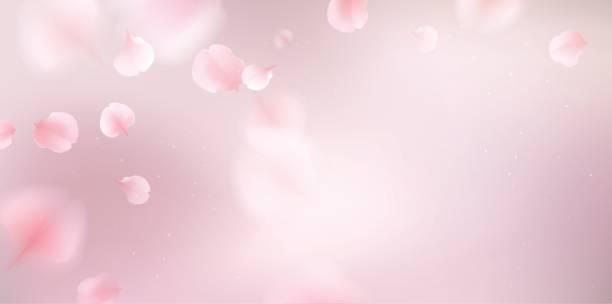 Pink sakura petals fall to the floor. vector art illustration