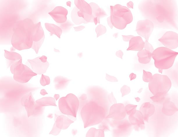 花のベクトルの背景のピンクの桜花びら。ロマンチックな花は、白い背景で隔離。バレンタイン 3 d 図をオーバーレイします。春の優しい光センターの背景。優しさロマンス デザイン - image点のイラスト素材/クリップアート素材/マンガ素材/アイコン素材