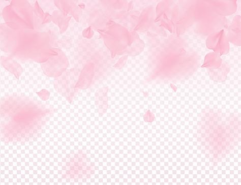 Pink sakura petals transparent background. A lot of falling petals 3D romantic valentines day illustration. Spring tender light backdrop. Translucent overlay tenderness romance design