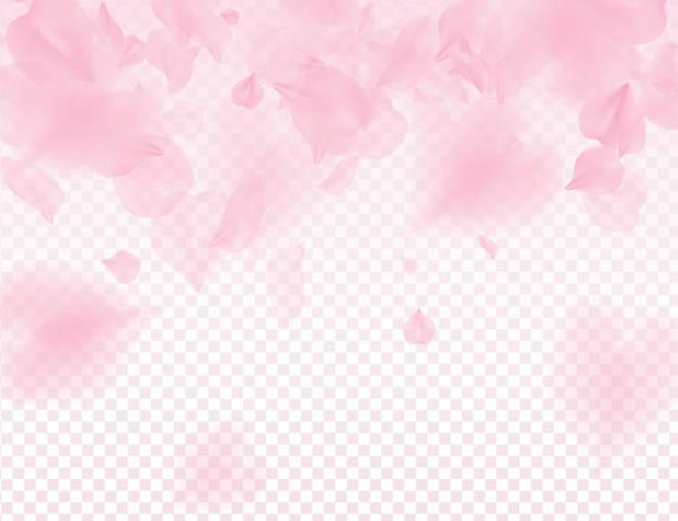 Pink sakura petals transparent background. A lot of falling petals 3D romantic valentines day illustration. Spring tender light backdrop. Translucent overlay tenderness romance design Pink sakura petals transparent background. A lot of falling petals 3D romantic valentines day illustration. Spring tender light backdrop. Translucent overlay tenderness romance design. femininity stock illustrations