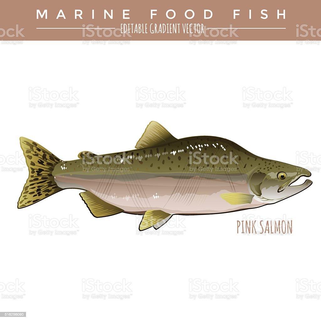 Pink Salmon. Marine Food Fish vector art illustration