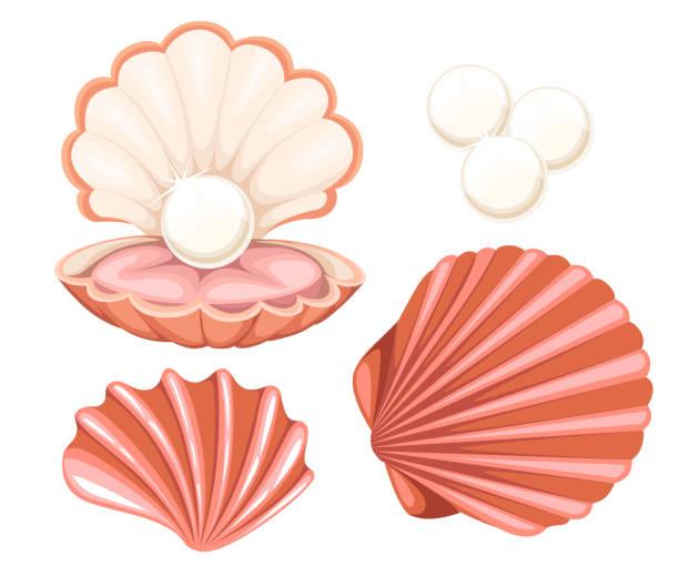stockillustraties, clipart, cartoons en iconen met roze schelp met een parel. vectorillustratie geïsoleerd op een witte achtergrond. - zeeschelp