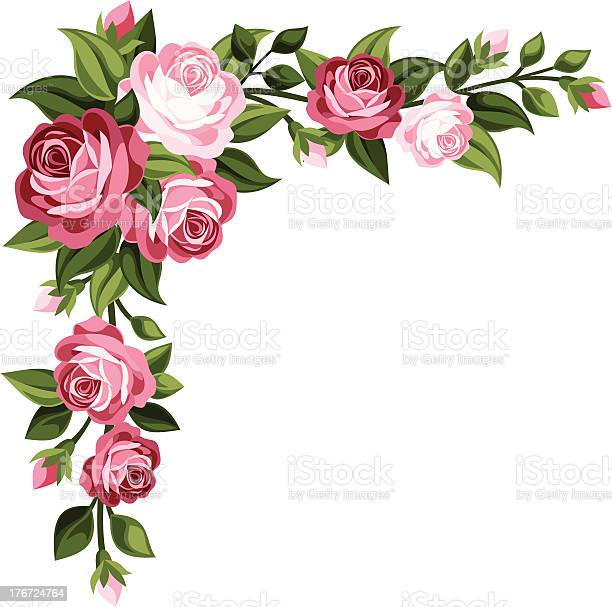 Vector corner with vintage pink roses, rose buds and green leaves isolated on a white background.
