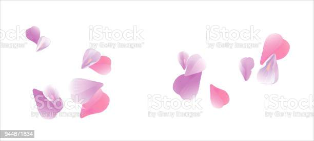 Pink violet flying petals isolated on white background sakura roses vector id944871834?b=1&k=6&m=944871834&s=612x612&h=twzlzishhwdlh4nydohmlllmwfz0mce5gu6 40stl4w=