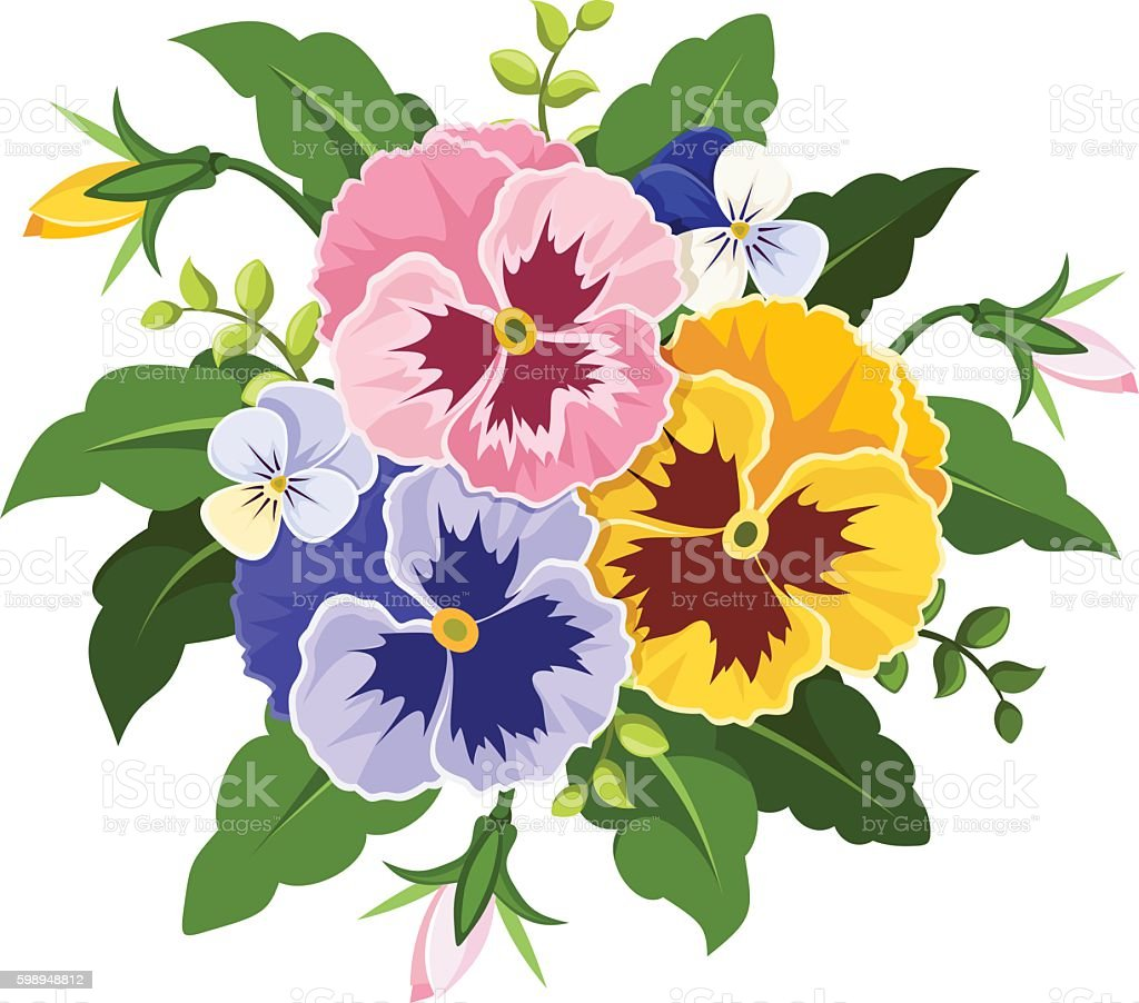 pink yellow and purple pansy flowers vector illustration stock rh istockphoto com pansy drawing clipart pansy drawing clipart