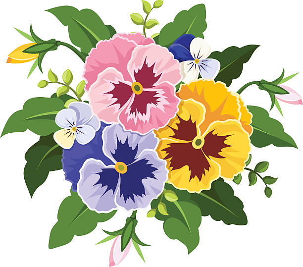 Pansy Illustrations, Royalty-Free Vector Graphics & Clip