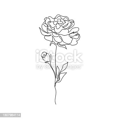 istock Pion flower drawn one line. Vector illustration in graphic style. 1307984114