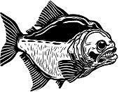 Piranha fish illustration isolated on white background. Design element for poster, t shirt, banner, emblem.