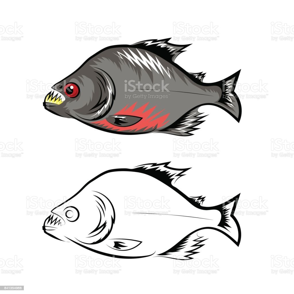Piranha Fish Isolated on White Background vector art illustration