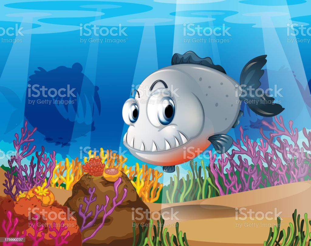 piranha near the coral reefs royalty-free piranha near the coral reefs stock vector art & more images of animals hunting