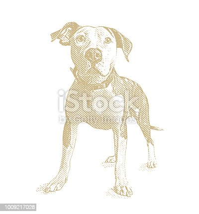 Engraving illustration of a Pit Bull Terrier dog in animal shelter hoping to be adopted