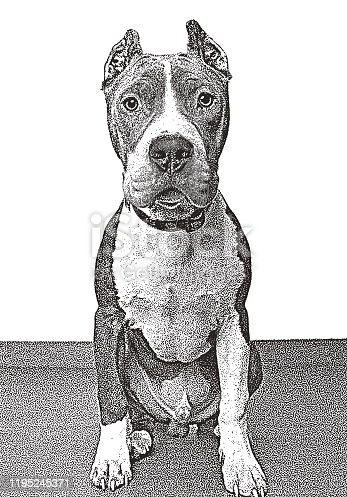 istock Pit Bull Terrier dog in animal shelter, hoping to be adopted 1195245371