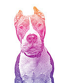Mezzotint vector of a Pit Bull Terrier in animal shelter hoping to be adopted