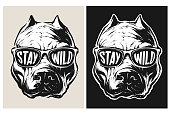 Vector Pit Bull Wearing a Sunglasses