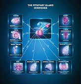 Pituitary gland secreted hormones and influenced organs in the body. Beautiful bright blue info graphic