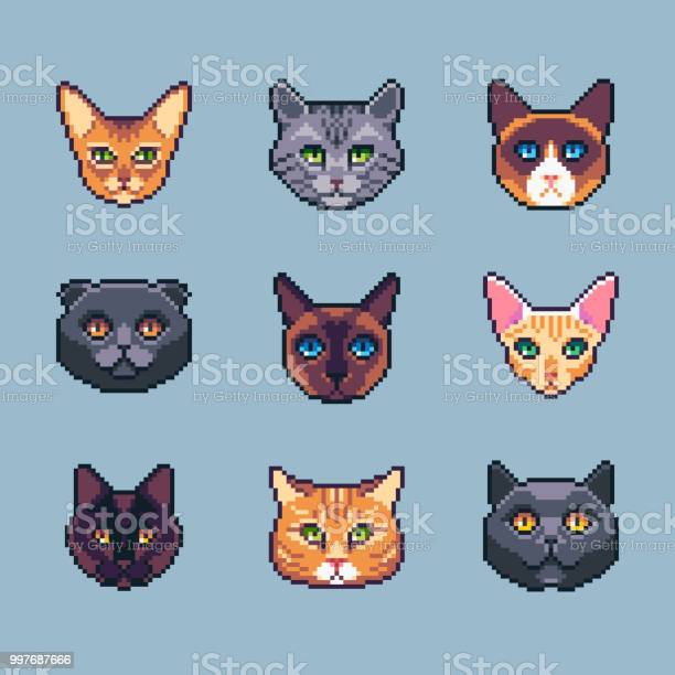Pixel art vector cat breeds icons set vector id997687666?b=1&k=6&m=997687666&s=612x612&h=rv6h5iged cifb9o heqa8 aiepnhad5rpzp1uugtnu=