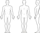 Plain illustration of the male body