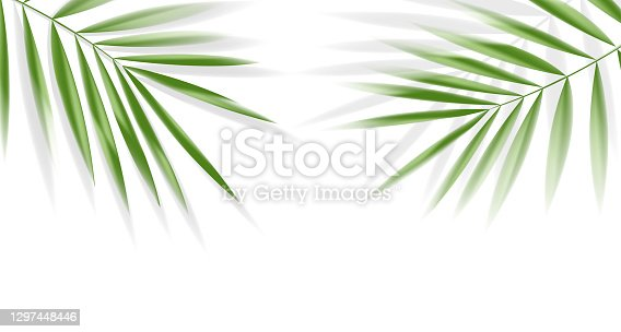 Plam leaves on white background with clipping path for tropical leaf design element.vector illustration design