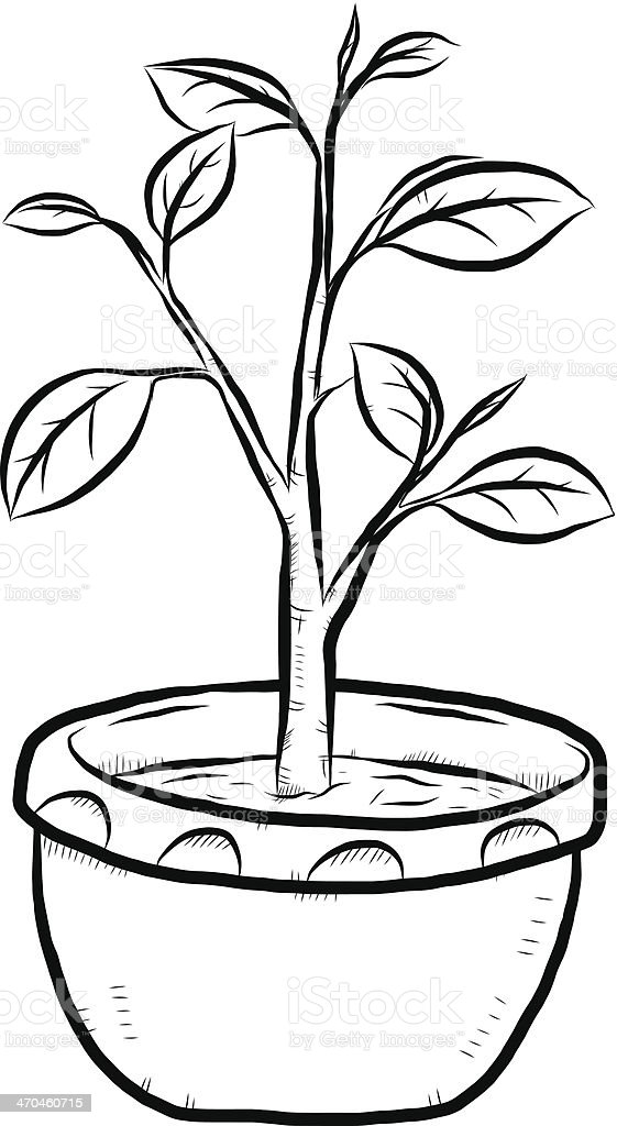 plant and earthen pot royalty free stock vector art