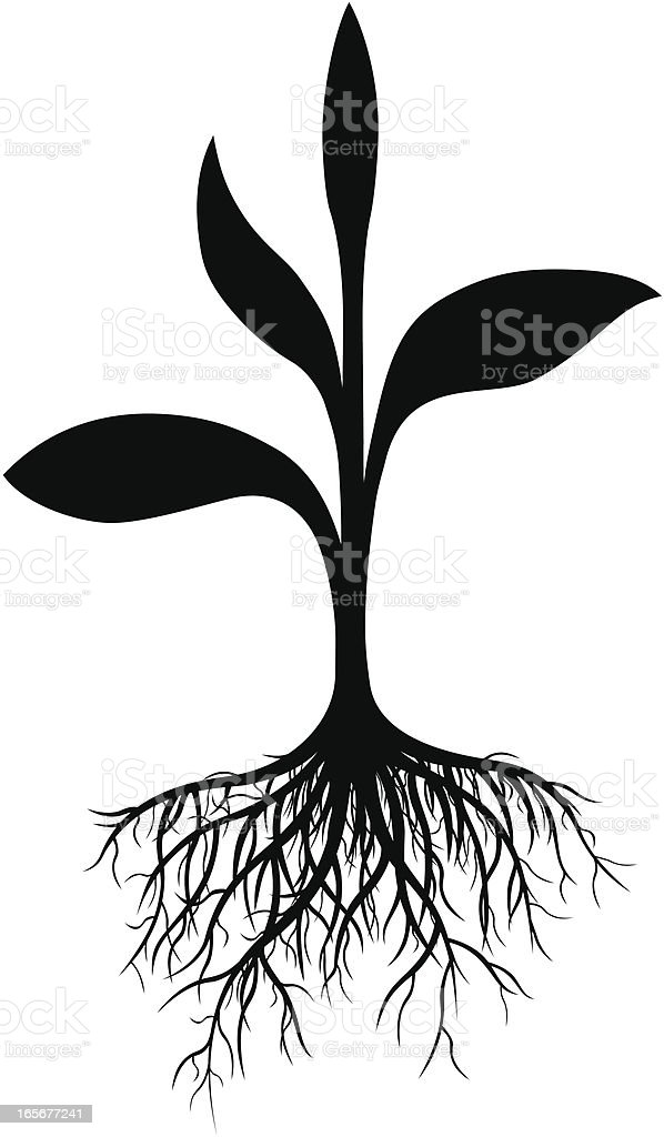 Plant and Roots royalty-free stock vector art
