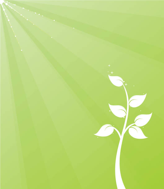 растение фон - four seasons stock illustrations