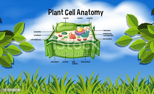 Plant cell anatomy in nature illustration