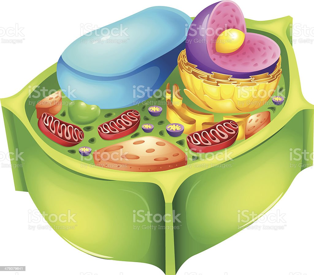 Plant Cell Stock Vector Art & More Images of Anatomy 479379641 | iStock
