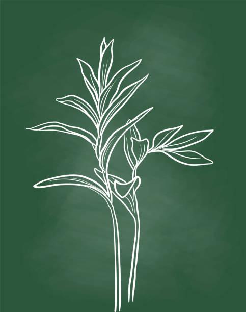 Plant Chalkboard vector art illustration