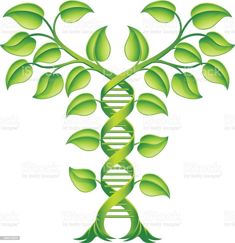 DNA Plant Double Helix Concept vector art illustration