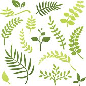 Collection of plant and leaf elements.