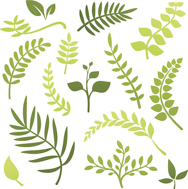 plant elements - vine stock illustrations, clip art, cartoons, & icons