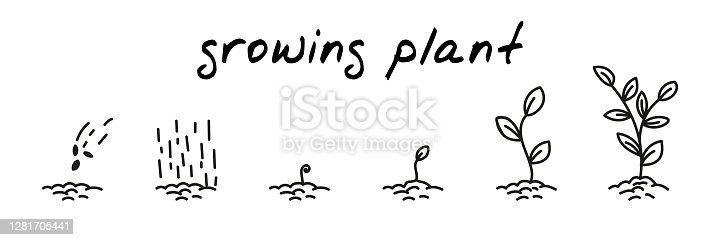 istock Plant growing concept handdrawn illustration. Cute cartoon vector clip art with 6 illustrations depicting different stages of plant growth from sowing to leaves. Black and white linear sketch 1281705441