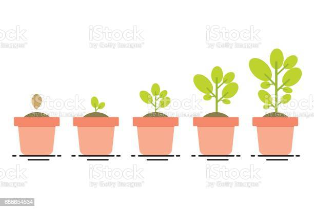 Plant growing stages vector id688654534?b=1&k=6&m=688654534&s=612x612&h=maewxfbb7wy6wb0yupgcufbrk5voa5dhrjsa hc q7w=