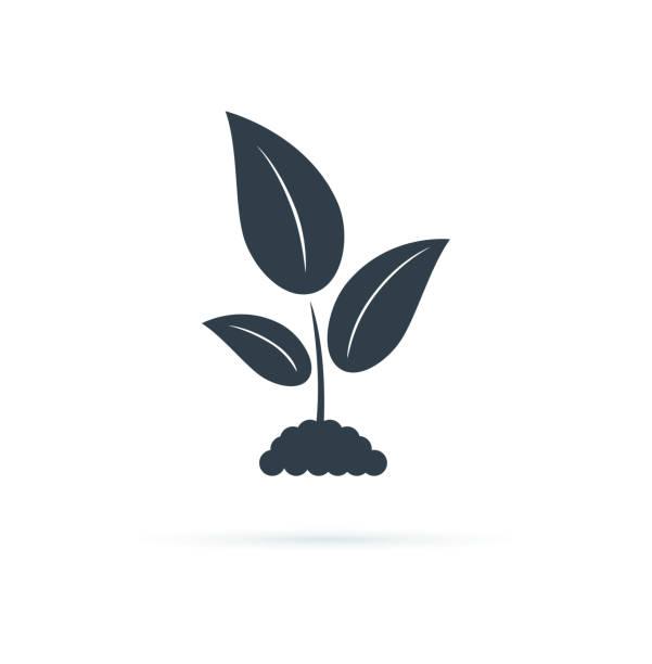 pflanze icon. vector icon illustration. landwirtschaftssymbol, biologieanbauzeichen, gartenpflanze. symbol des naturblattes - zeichensetzung stock-grafiken, -clipart, -cartoons und -symbole