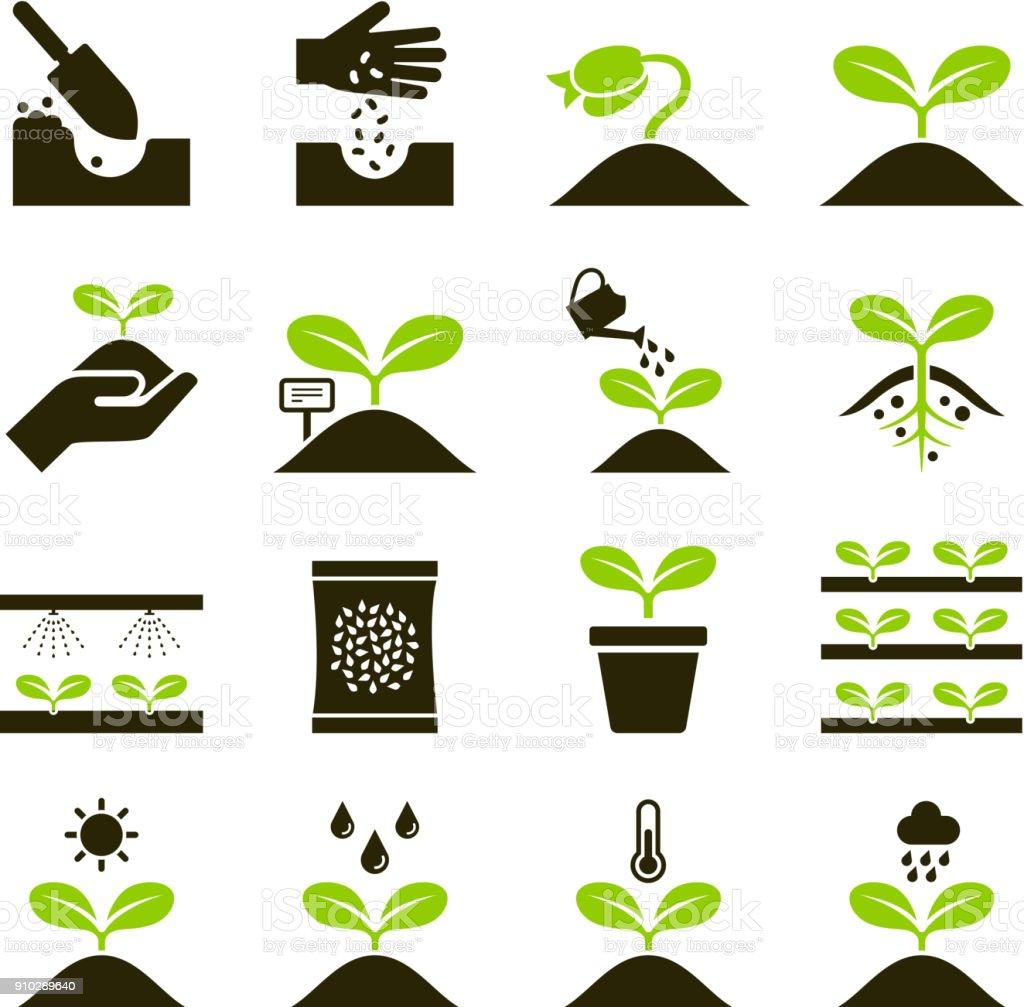 Iconos de la planta. - ilustración de arte vectorial