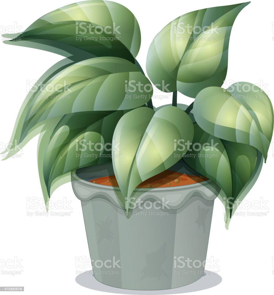 plant in a pot royalty-free plant in a pot stock vector art & more images of brown