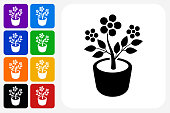 Plant in Pot Icon Square Button Set. The icon is in black on a white square with rounded corners. The are eight alternative button options on the left in purple, blue, navy, green, orange, yellow, black and red colors. The icon is in white against these vibrant backgrounds. The illustration is flat and will work well both online and in print.