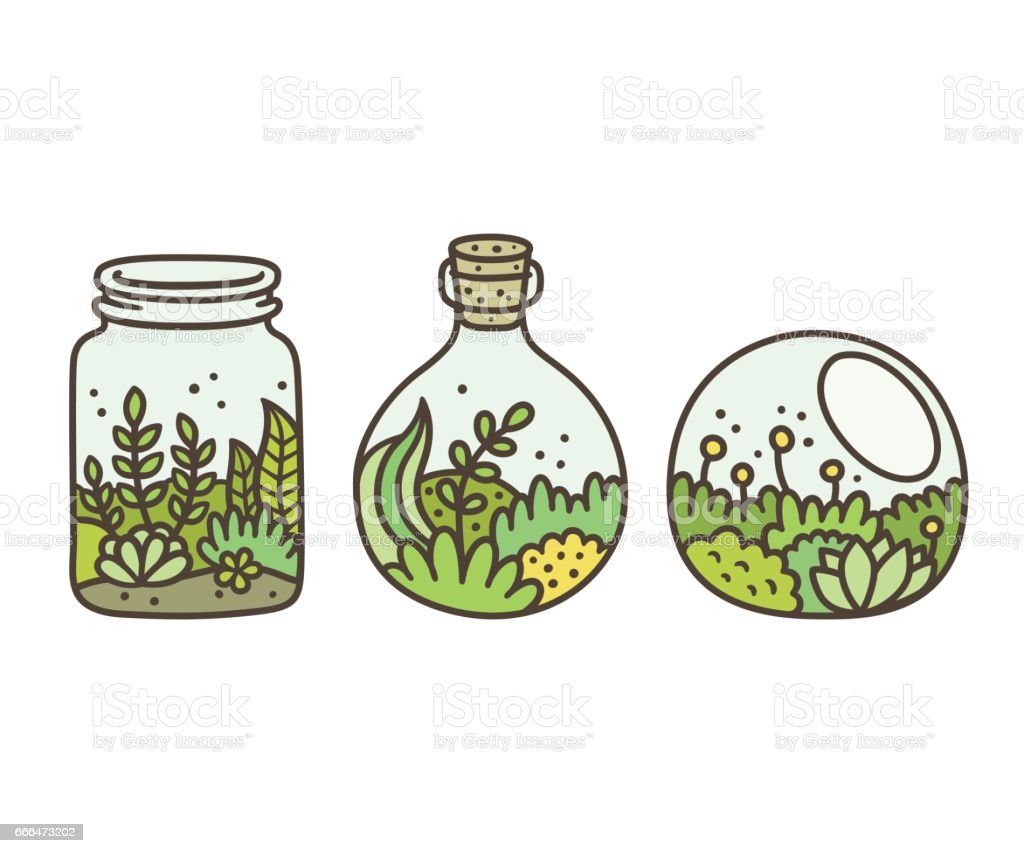 Plant In Terrariums Stock Illustration Download Image Now Istock