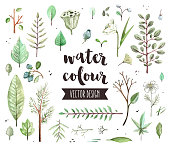 Premium quality watercolor icons set of various plant leaves, wild trees branch. Hand drawn realistic vector decoration with text lettering. Flat lay watercolour objects isolated on white background.