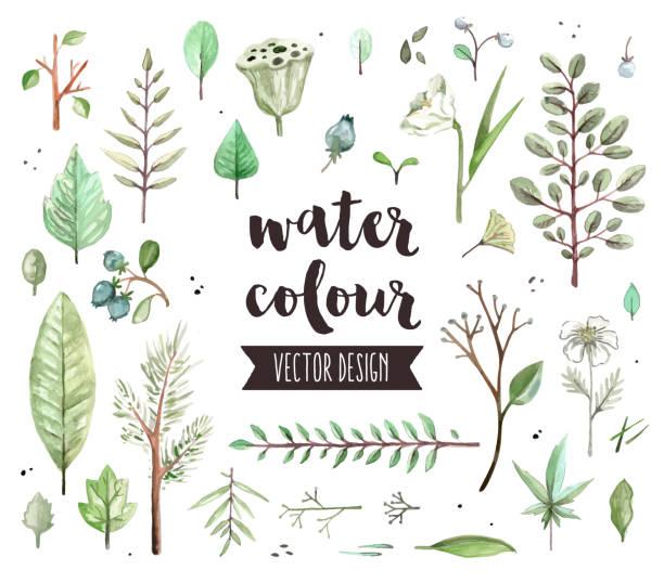 plant leaves watercolor vector objects - gałązka stock illustrations