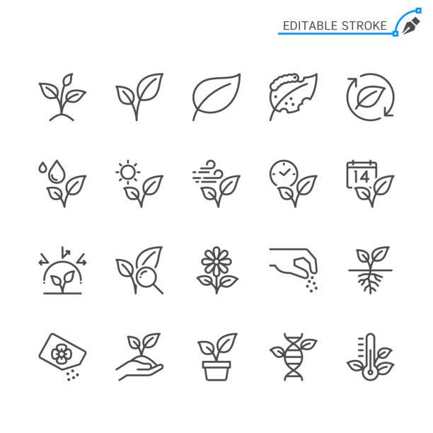 ilustrações de stock, clip art, desenhos animados e ícones de plant line icons. editable stroke. pixel perfect. - flora