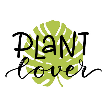 Plant lover lettering quote with a monstera leaf green silhouette clipart to make cards, wall art, t-shirt iron on, bag sublimation print design. Planter decoration. Vector flat illustration.
